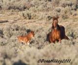IronsidesMareFoal-28April2011-web.jpg