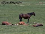 PiceanceHorses_9678-25May2011.jpg