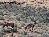 PiceanceHorses_0947-25May2011-web-.jpg
