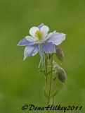 Columbine-15July2011-VaughnLake-web.jpg