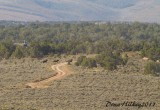 Piceance/East Douglas Wild Horse Gather 2011