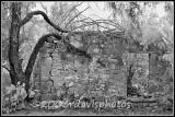 Ruin at San Ygnacio