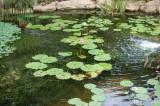 AOS Pond