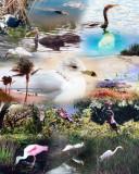 Florida Wildlife collage
