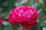 Charleston Flower