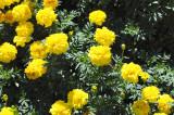 Flowers at Atlanta Botannical
