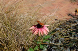 Flower in the Rough