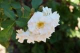 Flower in Atlanta