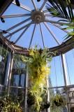 Atlanta Botannical Gardens