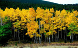 Gathering Leaves Autumn Nature Pictures.jpg