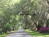 Savannah GA
