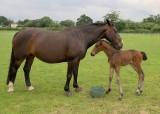 Bailey the Foal
