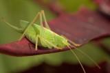 Macro Images 2012