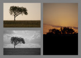 Light/ Lack of... Lonely Tree Triptych 2 (bucket)
