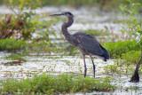 In the wetlands