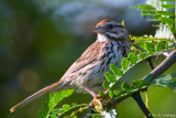 Sparrow and leaves