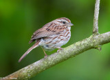 Sparrow at forest's edge
