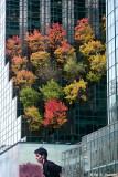 Tree terrace