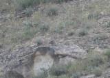 See-See Partridge Wadi in Birecik