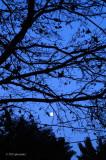 Oct Moon Rising