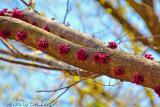 Alas Springtime  - 2011