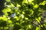 24JUL11 - Redwood Nat'l Forest
