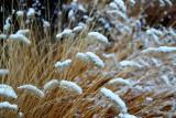 grass4636.jpg