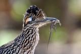 Birds of Southern Arizona