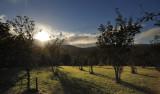 Plantation at Glen Roy