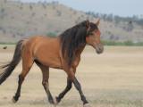 Black Hills Wild Horse Sanctuary (Gallery-24 Images)