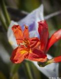 April 1st Flowers