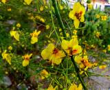 Verano Flowers