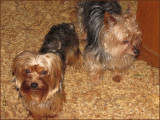 Tiggy Tedley & Timmy have Many 4 Footed Friends