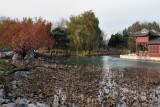 L'étang aux lotus