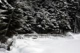 Deer tracks on the lake