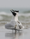DANISH BIRDS 2010