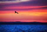 Heron Descending