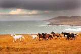 Galloping Herd