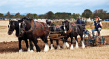 Team Ploughing