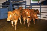Sixmilebridge Cattle Market