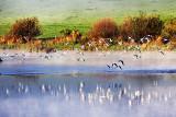Seagull Flock in Fog