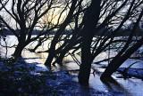 Flooded Riverside