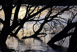 Flooded Riverbank