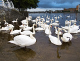 Nine-and-Fifty Swans