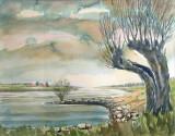 NIET BESCHIKBAAR - Knotwilg aan de IJssel bij Gorssel (aquarel)- 0731.jpg