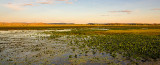 Hawk Dreaming Wetland Sunset Panorama