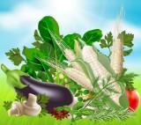 Organic Vagetables