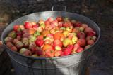 Apples for cider
