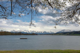 Spring is coming on Baldeggersee
