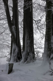 Black Forest Winter